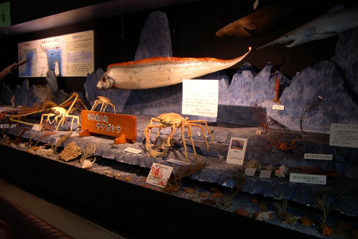 Suruga Bay Deep Sea Creatures Museum